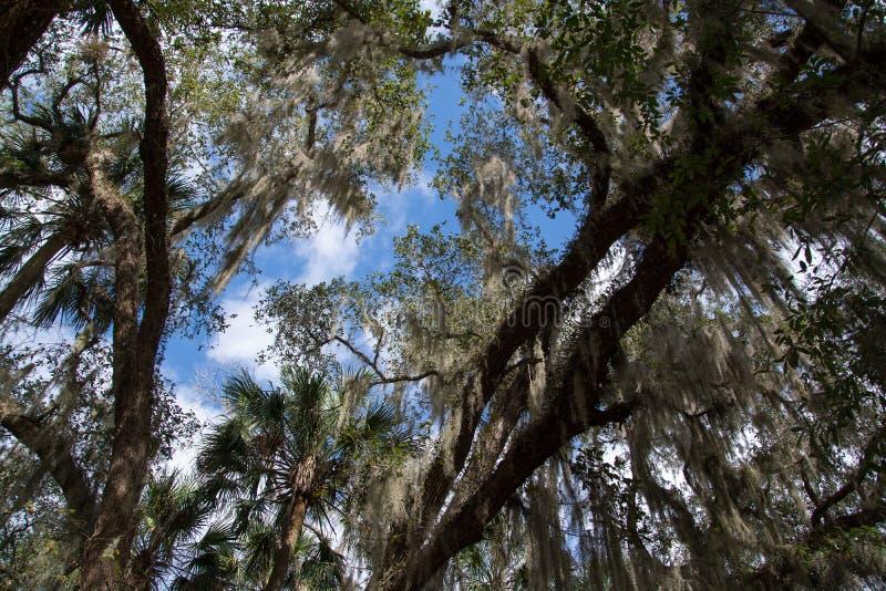 Parque de estado azul de la primavera, la Florida, los E.E.U.U. fotos de archivo libres de regalías