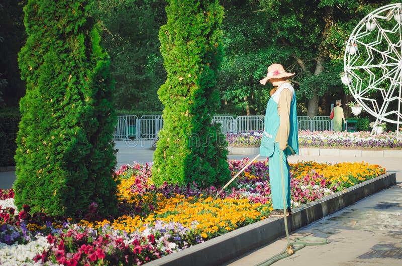 Parque de Gorki Flores de riego de un empleado del parque de una manguera Cada mañana en este parque, trabajadores imagen de archivo libre de regalías