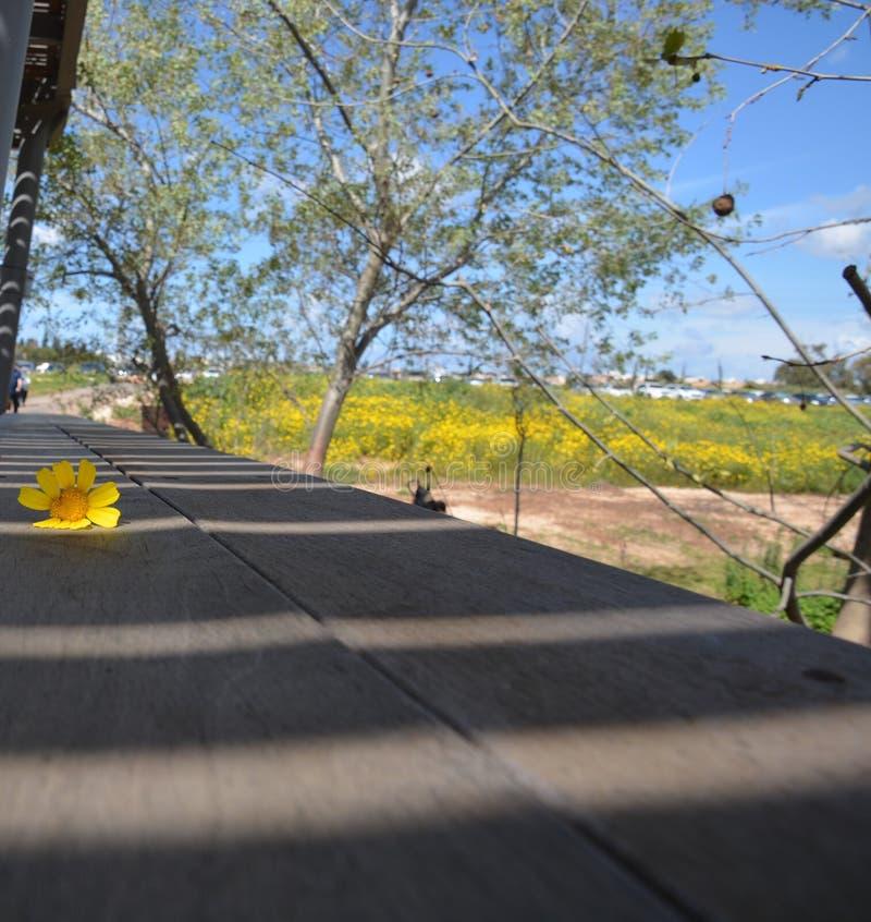 Parque de Hasharon do Hod fotografia de stock royalty free