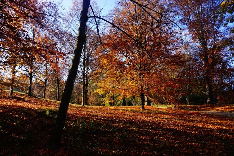 Parque de Ingolstadt fotografía de archivo libre de regalías