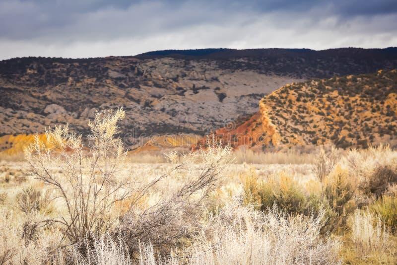 Parque de la casa de campo de los ciervos, Colorado en invierno fotografía de archivo libre de regalías