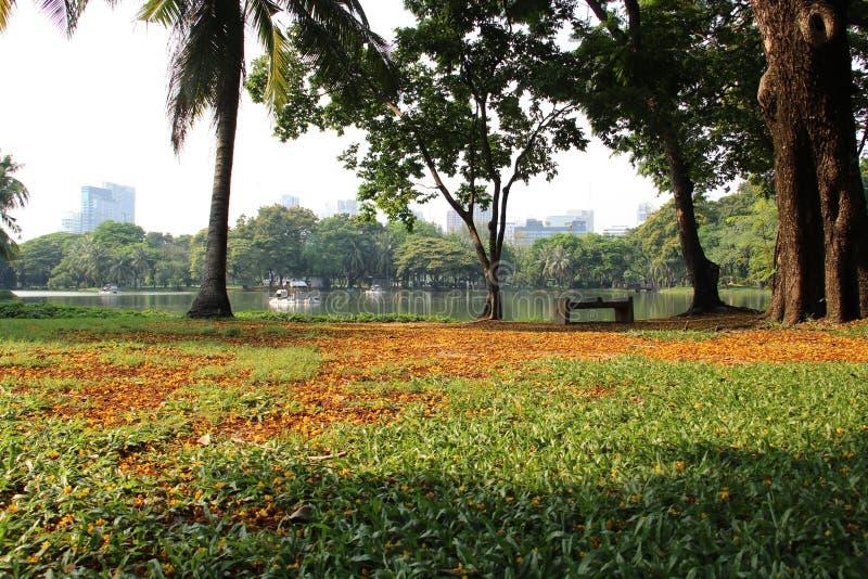 Parque de la ciudad con las flores caidas en hierba verde y sol caliente fotografía de archivo libre de regalías