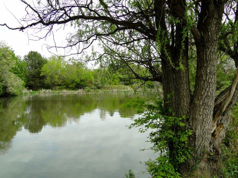 Parque de la ciudad en Boise, Idaho imagen de archivo libre de regalías