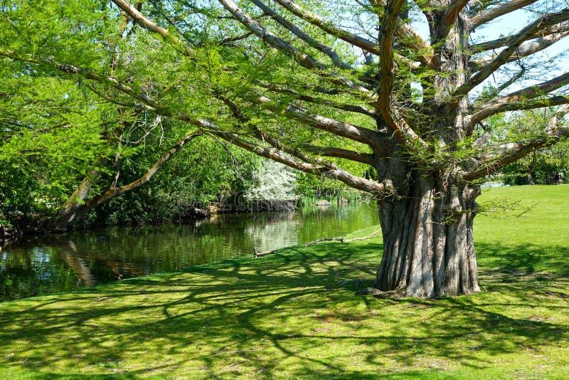 Parque de la ciudad en Boise, Idaho foto de archivo