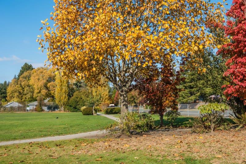 Parque de la ciudad en el otoño 4 imagenes de archivo