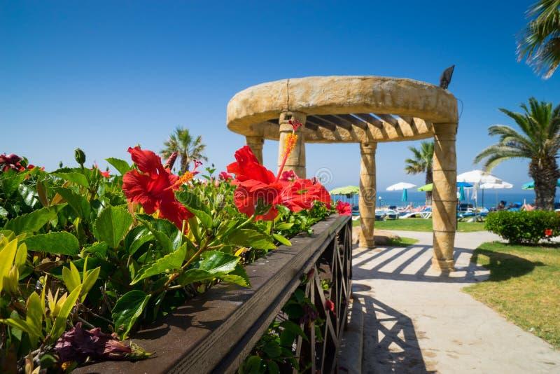 Parque de la playa con las flores rojas imagenes de archivo