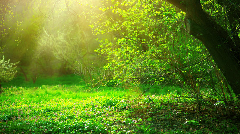 Parque de la primavera con la hierba verde y los árboles foto de archivo