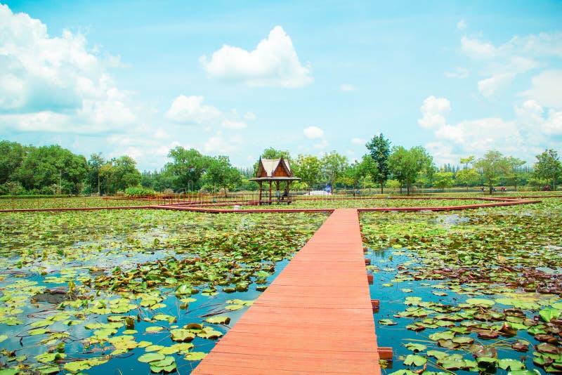 Parque de Lotus imagens de stock
