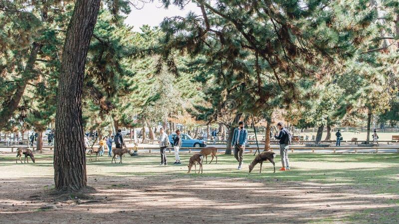 Parque de Nara en Japón con ciervos y turistas alrededor Ciervos que vagan por en Nara Park en Japón imagen de archivo libre de regalías
