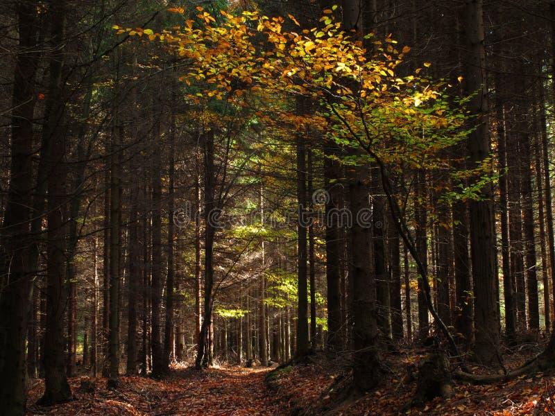 Parque de naturaleza - Ceske Svycarsko foto de archivo