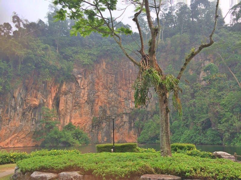 Parque de naturaleza de Bukit Batok fotos de archivo libres de regalías