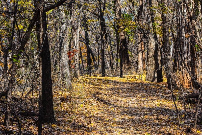 Parque de naturaleza de Martin en la caída foto de archivo libre de regalías