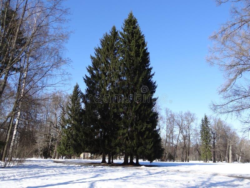 Parque de Pavlovsk Pavlovsk St Petersburg Rusia fotos de archivo libres de regalías