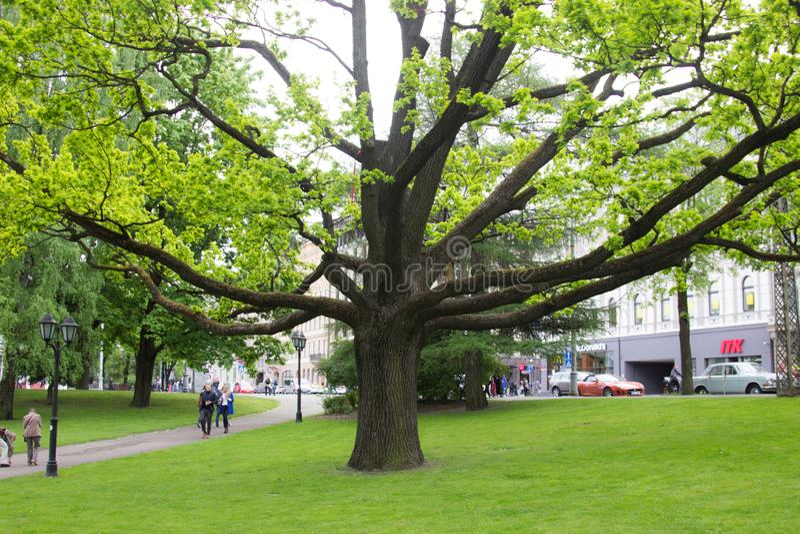 Parque de Riga fotografia de stock