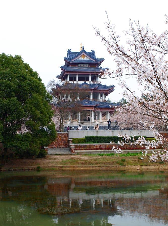 Parque de Sakura fotografia de stock royalty free