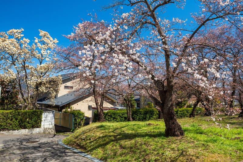 parque de sakura na vila na mola imagens de stock