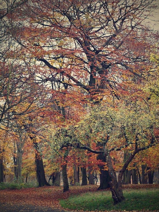 Parque de Sefton - a foto no outono estilo-bonito de Van Gogh, sae da queda das árvores imagens de stock