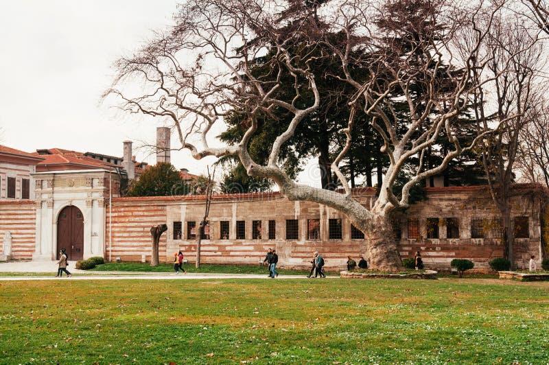 Parque de Topkapi com a árvore velha muito grande ao lado de Hagia Sophia no fotografia de stock royalty free