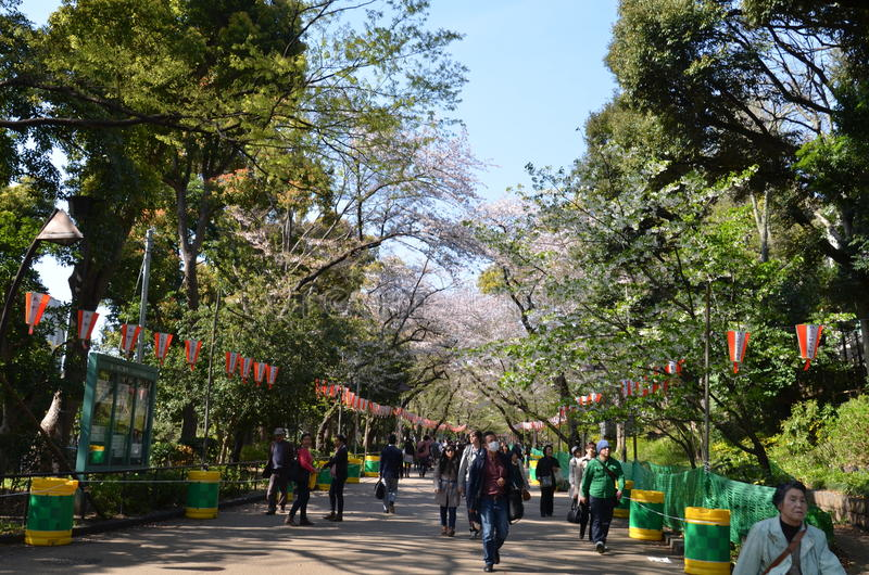 Parque de Ueno en la primavera fotos de archivo