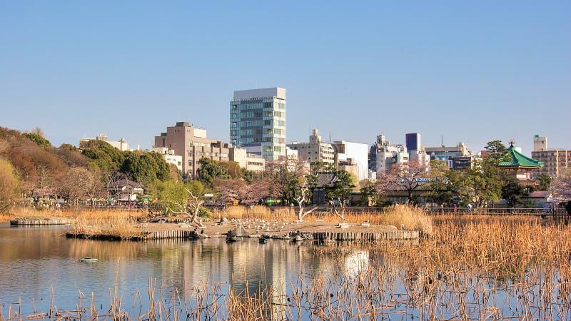 Parque de Ueno, Tokio, Japón imágenes de archivo libres de regalías