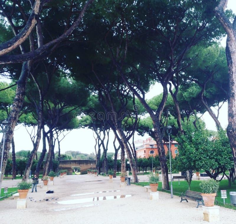 Parque del árbol anaranjado en Roma fotografía de archivo libre de regalías