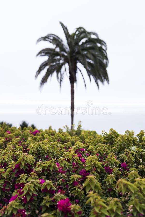 Parque del amor en Lima, Perú fotos de archivo libres de regalías