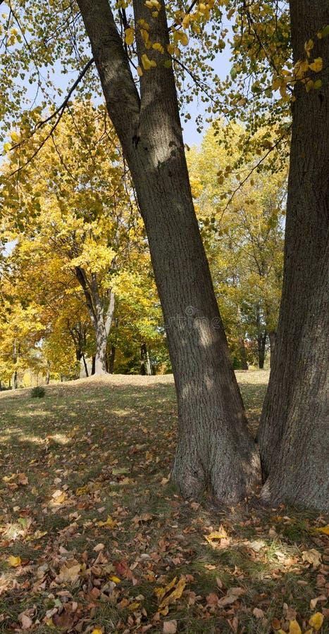 Parque del arce en otoño fotos de archivo