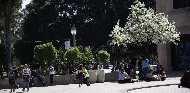 Parque del balboa imágenes de archivo libres de regalías