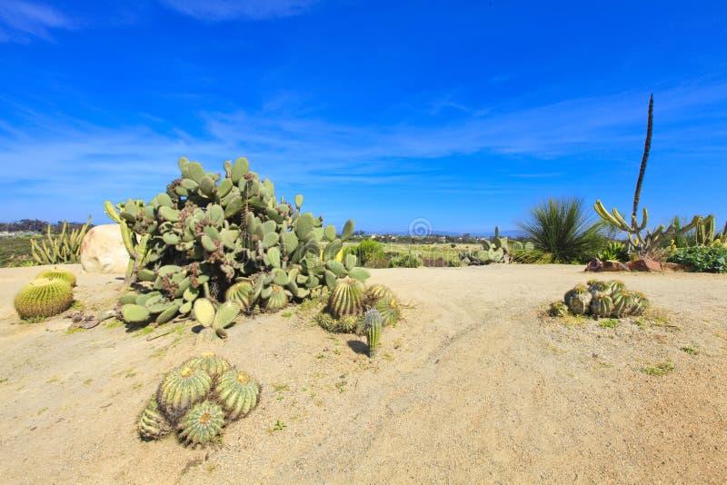 Parque del balboa en San Diego, jardín del cacto fotografía de archivo