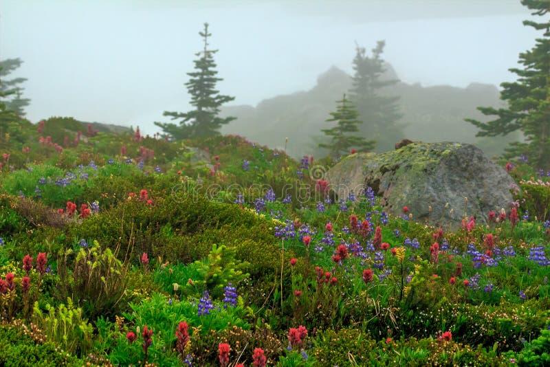 Parque del espray, Washington State imagen de archivo