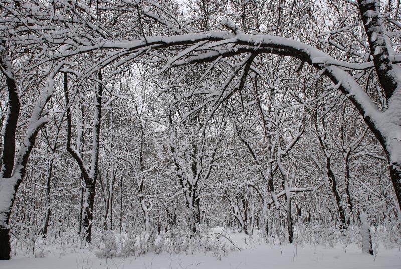 Parque del invierno foto de archivo libre de regalías