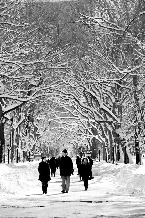 Parque del invierno fotos de archivo