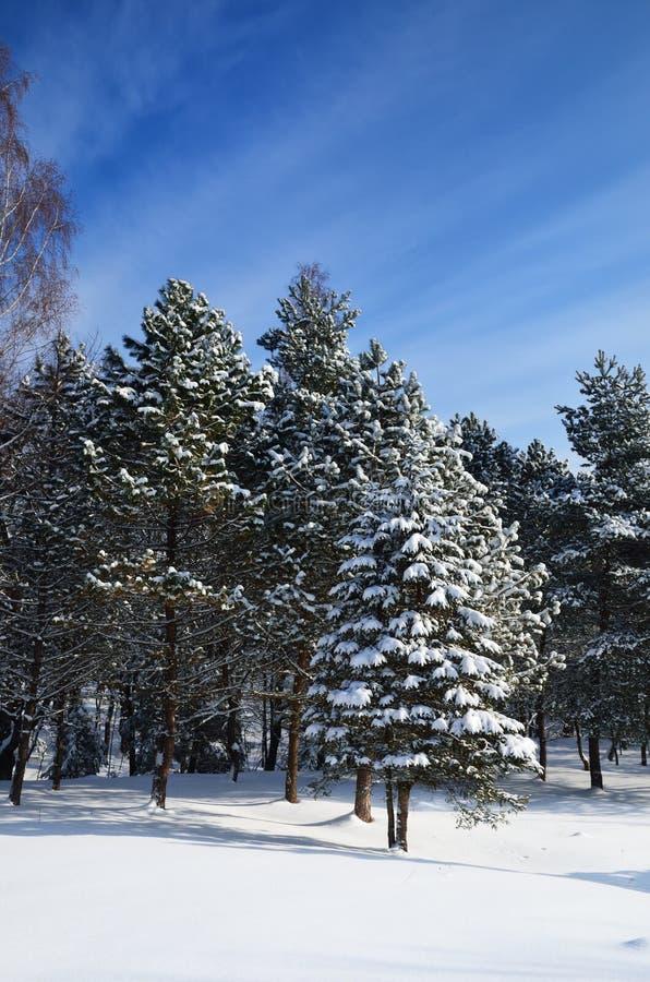 Parque del invierno cubierto con nieve en Truskavets foto de archivo libre de regalías