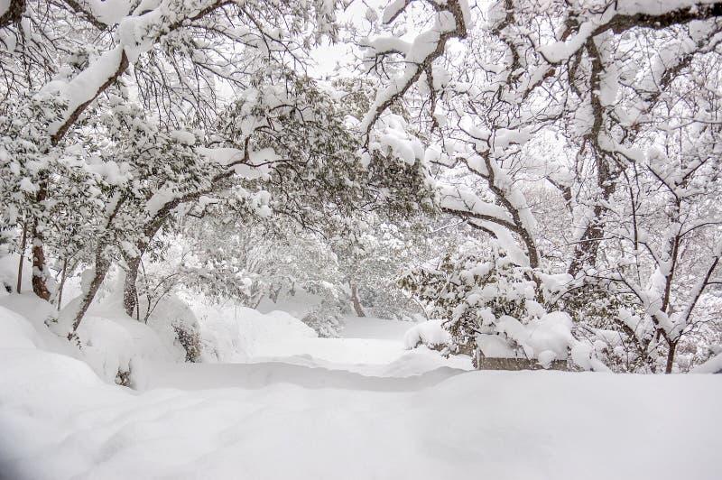 Parque del invierno debajo de la nieve fotografía de archivo