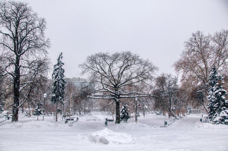 Parque del invierno en ciudad imagen de archivo