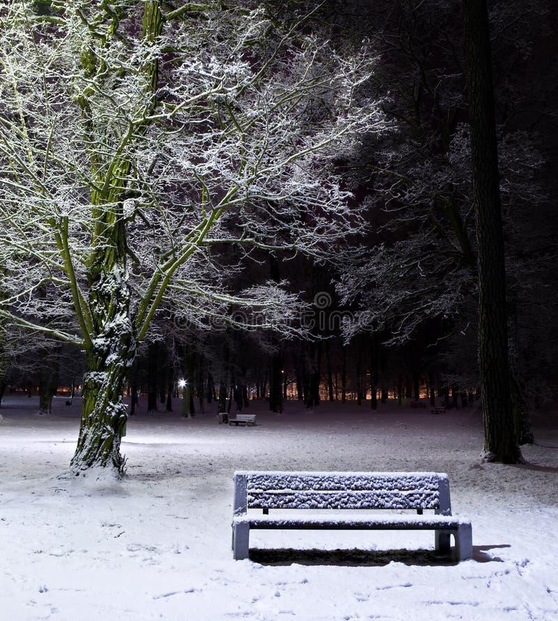 Parque del invierno en la noche imagen de archivo libre de regalías