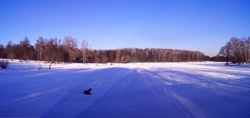 Parque del invierno en nieve imagen de archivo