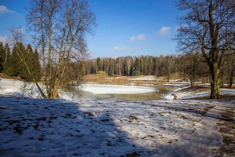 Parque del invierno en Pavlovsk fotografía de archivo