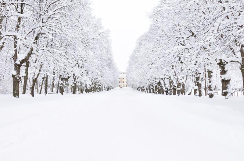 Parque del invierno, Pavlovsk, St Petersburg, Rusia imagen de archivo