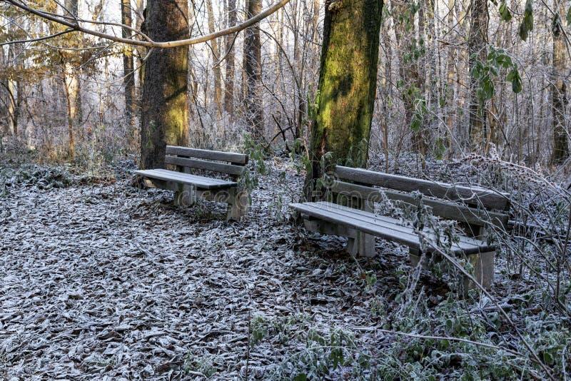 Parque del invierno por la mañana imagen de archivo