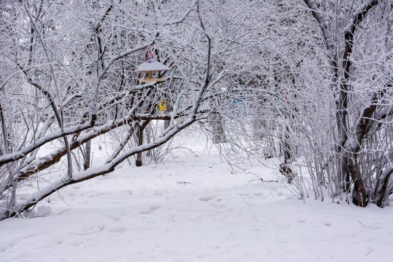Parque del invierno ulyanovsk foto de archivo libre de regalías