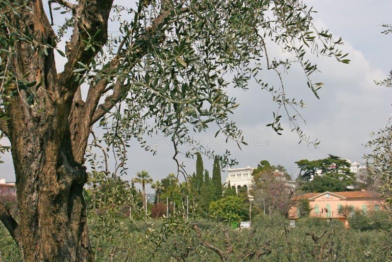 Parque del Monasterio de Cimiez en Niza foto de archivo libre de regalías