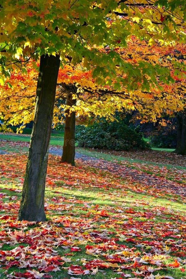 Parque del otoño fotografía de archivo