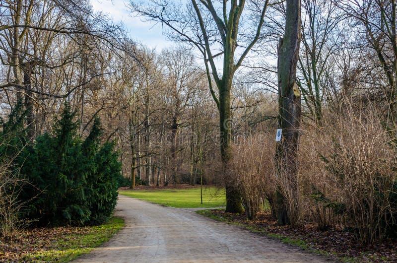 Parque del otoño con bosque e hierba verde fotos de archivo libres de regalías