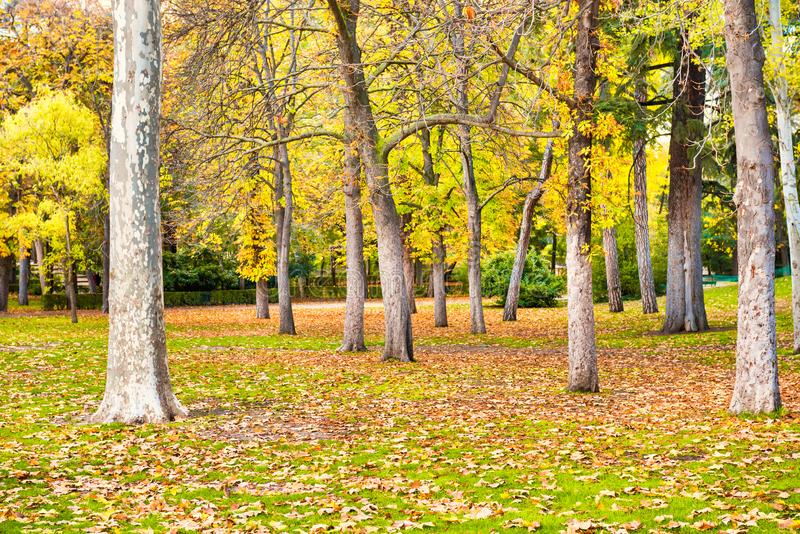 Parque del otoño con el césped verde con las hojas caidas foto de archivo