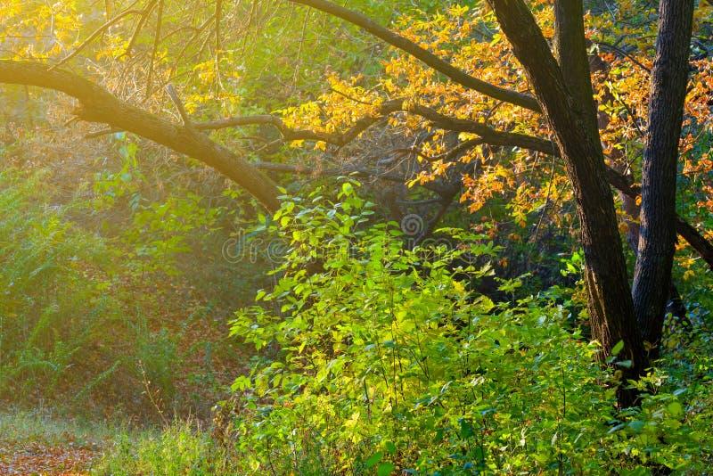 Parque del otoño de la tarde fotografía de archivo