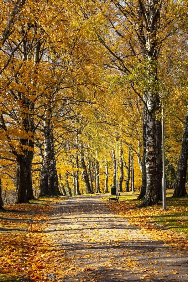 Parque del otoño en Finlandia Parque del otoño en Finlandia Los árboles son amarillo colorido fotografía de archivo libre de regalías
