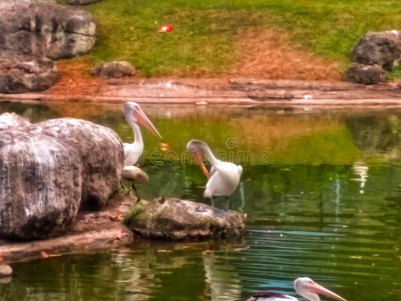 Parque del pájaro foto de archivo libre de regalías