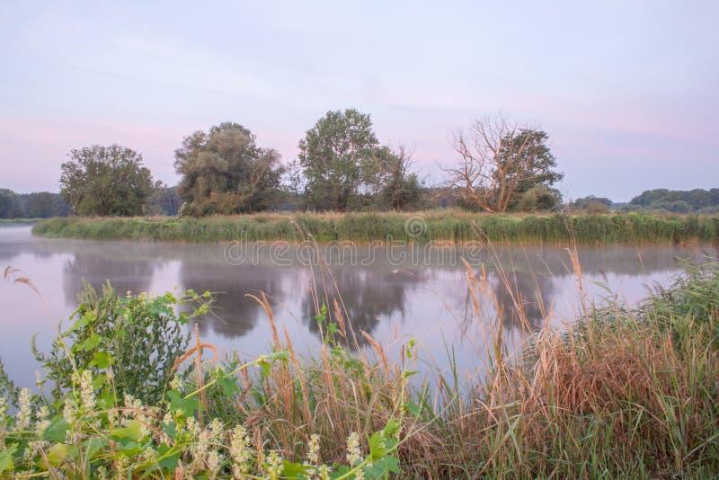 Parque del paisaje de Rogalin - robles viejos en los bancos del río en niebla antes de la salida del sol imágenes de archivo libres de regalías