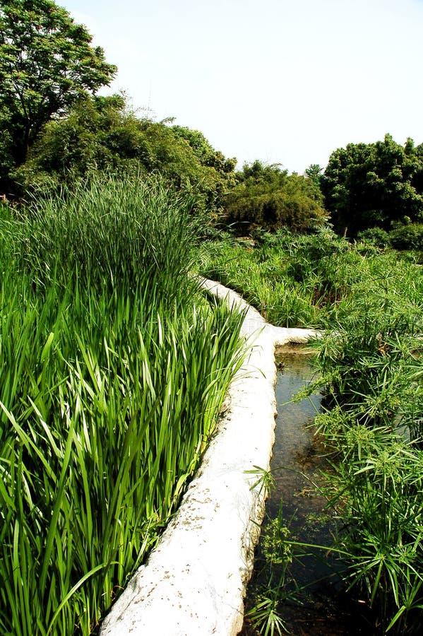 Parque del pantano imagen de archivo libre de regalías